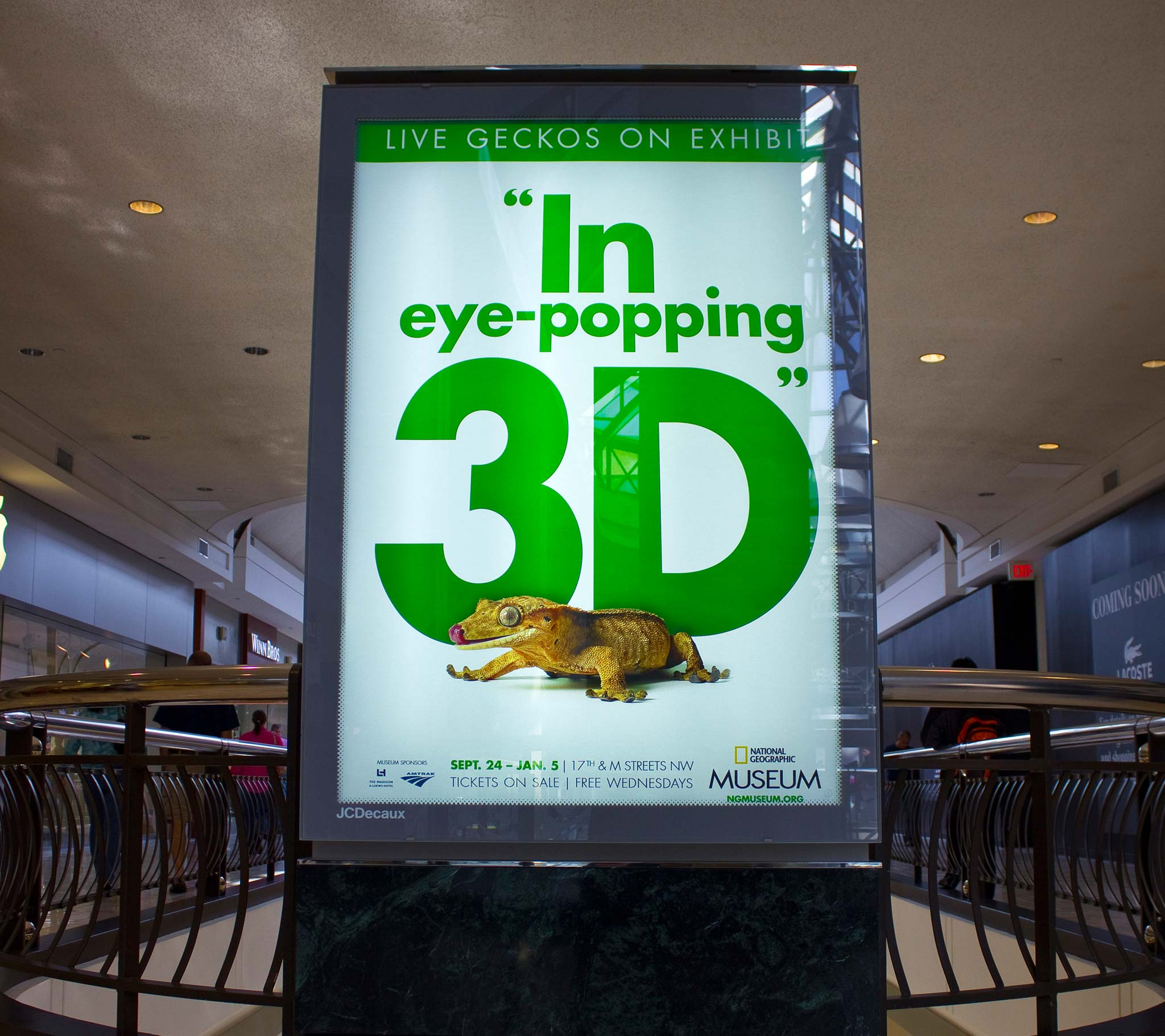 Geckos_Images-3D
