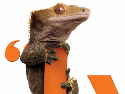 Portfolio_Thumbs_Gecko